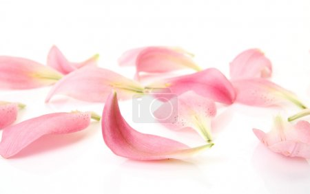 Photo for Petals pink lilies - Royalty Free Image