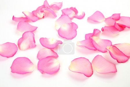 Photo for Petals of a pink ros - Royalty Free Image