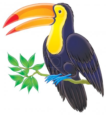 Dark blue toucan with a yellow belly and face