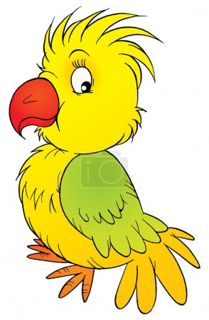Cute yellow and green parrot.