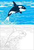 Orca leaping out of the water in a polar sea color and outline illustrations