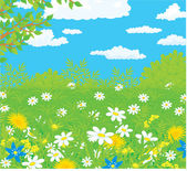 Wild daisies and dandelion flowers in spring growth under a blue cloudy sky