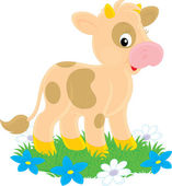 Cute brown spotted calf cow