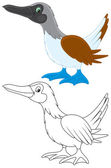Footed booby color and black-and-white outline illustrations on a white background