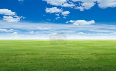 Panoramic field landscape