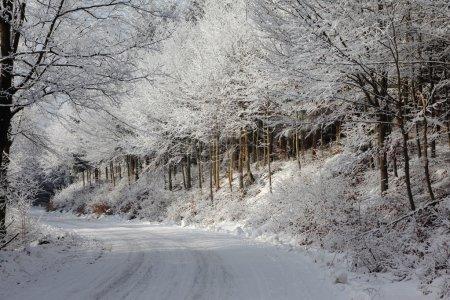 Photo pour Conte de fées d'hiver. bois d'hiver enneigé et une piste de ski large. - image libre de droit