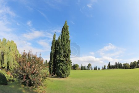 Two cypress on a green grassy lawn