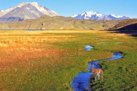 Photo pour L'Estancia solitaire dans le parc national Perito Moreno en Argentine.L'immense vallée entourée de montagnes enneigées. Traverse la vallée pittoresque du ruisseau - image libre de droit