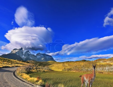 Photo for National Park Torres del Paine in southern Chile. A dirt road leads to the distant mountains.  graceful guanaco - Royalty Free Image