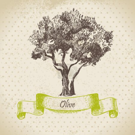 Olive tree. Hand drawn illustration
