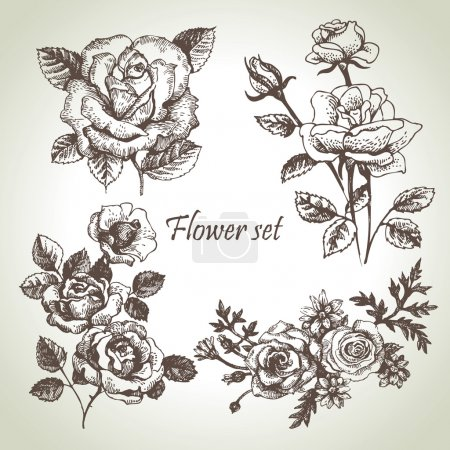 Illustration for Floral set. Hand drawn illustrations of roses - Royalty Free Image