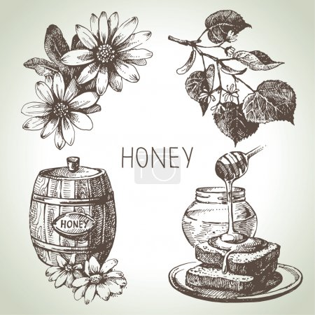 Honey set. Hand drawn vintage illustrations...