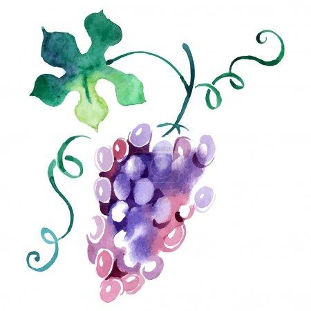 Painted watercolor grape.