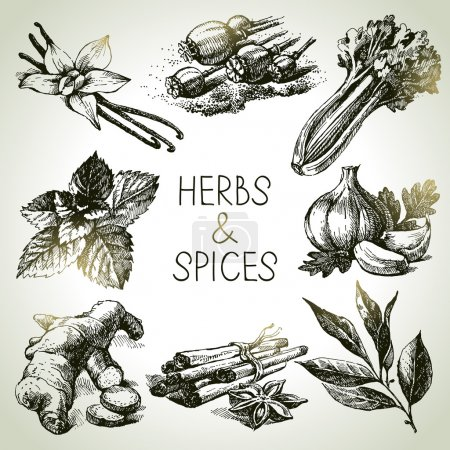 Kitchen herbs and spices