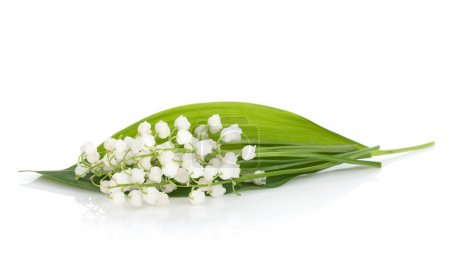 lily of the village