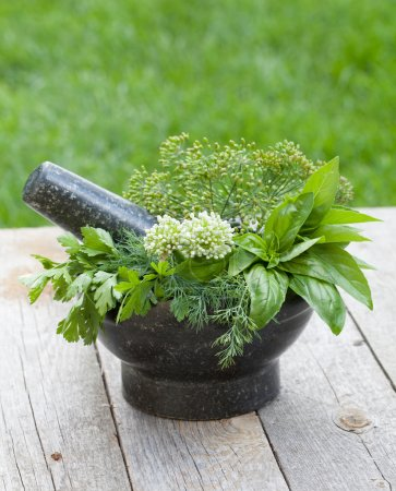 Photo for Fresh herbs in mortar on garden table - Royalty Free Image