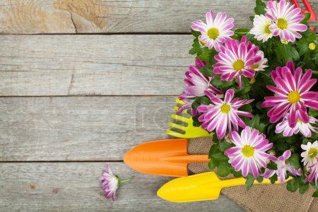 Potted flower and garden utensils