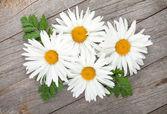 Heřmánek květiny