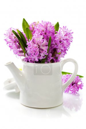 Photo for Beautiful Hyacinths in vase over white - Royalty Free Image