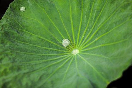 Photo pour Gros plan sur le feuillage vert frais - image libre de droit