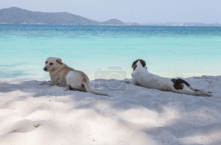 Dogs relaxing on beach