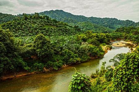 River in jungle.