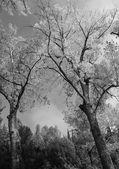 černobílý pohled na fonti del clitunno v Umbrii