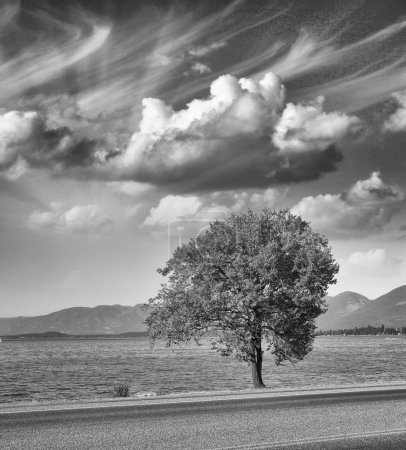 Isolated tree with sky on background
