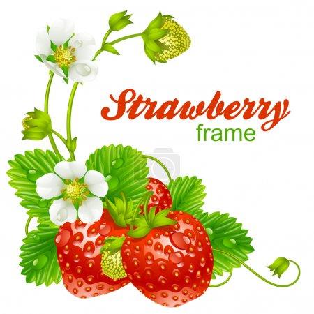 Illustration pour Cadre vectoriel fraise. Baies rouges et fleurs blanches isolées sur fond - image libre de droit