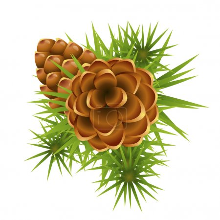 Pinecone ripens on branch