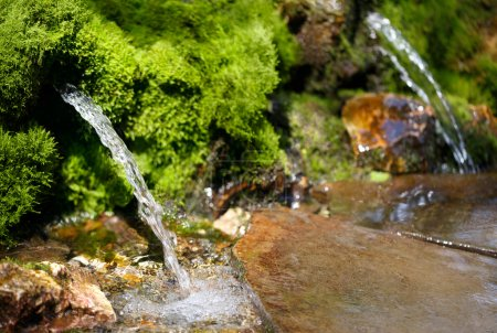 Source of spring water...