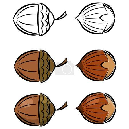 Cartoon set of vector images of hazelnut and acorn. eps10