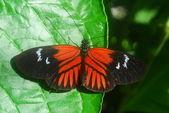červený motýl na zelený list