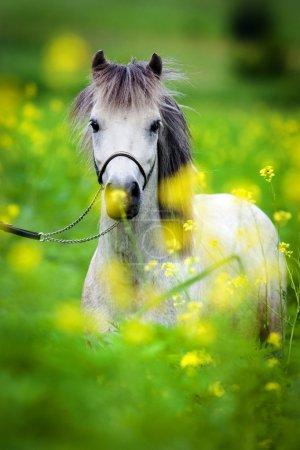 Pony auf dem Feld