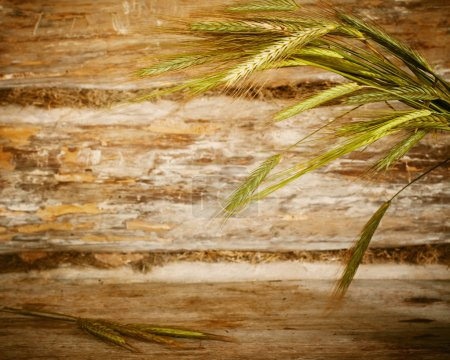 Wheat ear on wooden background