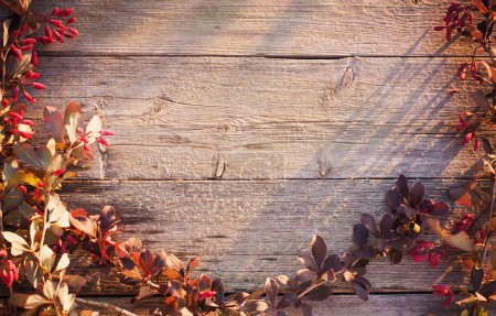 Barberry branch on a wooden background