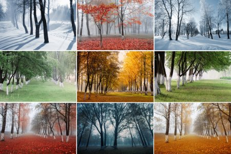 Photo for Park in different seasons - Royalty Free Image
