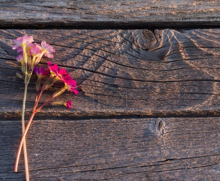 beautiful pink flowers  on wooden background