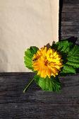 Flower on Vintage Background
