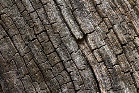 Burnt wood texture.