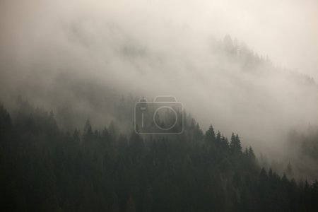 Fog covering the mountain forests...