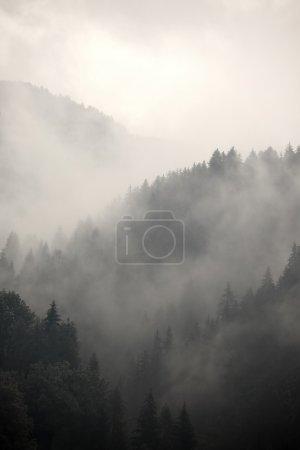 Photo pour Brouillard couvrant les forêts de montagne - image libre de droit