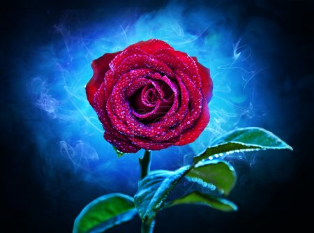 Red rose, a contrasting blue background, strewn wi...