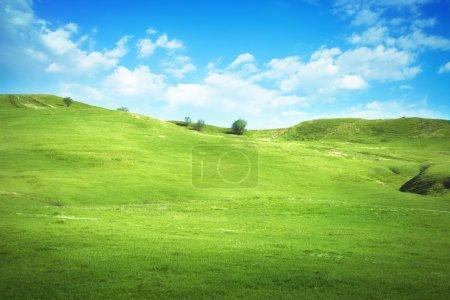 Photo pour Champ d'herbe et ciel bleu parfait - image libre de droit
