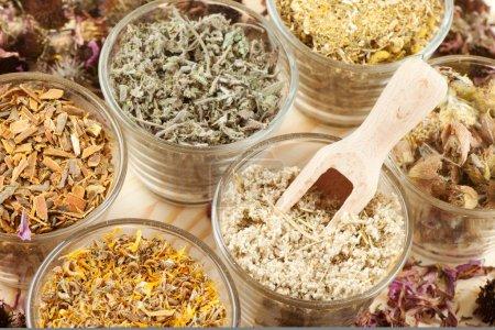 Photo pour Plantes médicinales en phytothérapie, tasses en verre - image libre de droit
