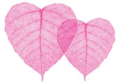 Red heart leaves vector