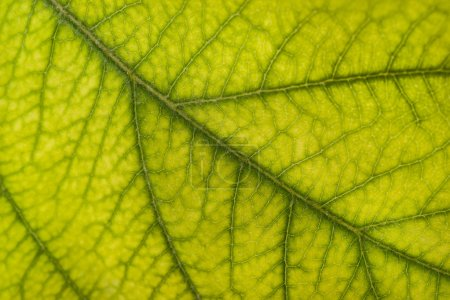 Green leaf: floral or environmental pattern