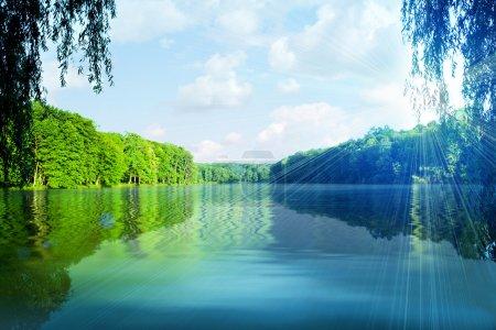 Photo pour Forêt pittoresque et la rivière - image libre de droit