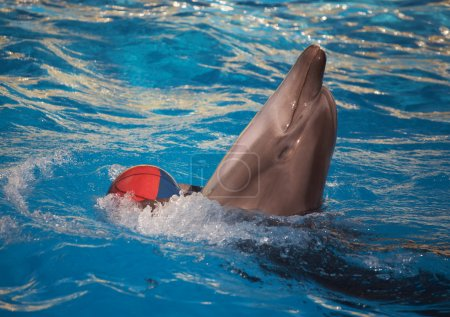 Dolphin dancing with ball