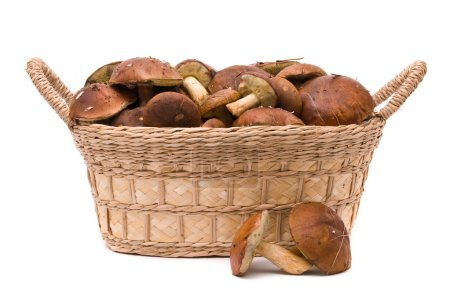 Basket with mushrooms isolated on a white background